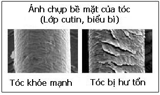 lop-cutin