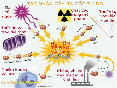tac-nhan-gay-goc-tu-do-vi